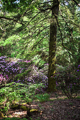 Photograph - Fairy Forest Of Blooming Rhododendrons 8 by Jenny Rainbow