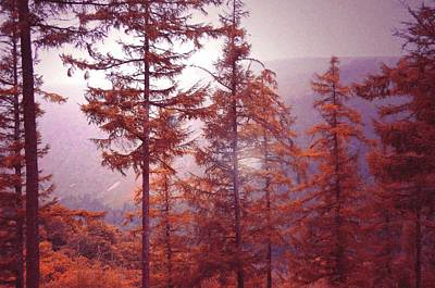 Photograph - Fairy Irish Journey. Woodland Of Glendalough by Jenny Rainbow