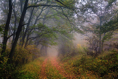 Mountain Royalty-Free and Rights-Managed Images - Fairy Wood by Evgeni Dinev