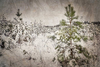 Photograph - Fairytale Of Winter Forest. Shchymel, 2018. by Andriy Maykovskyi
