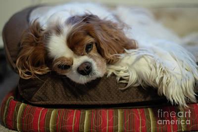 Photograph - Faithful Companion by Dale Powell
