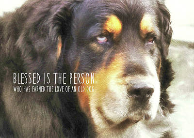 Dog Quotes Photographs (Page #3 of 5) | Fine Art America