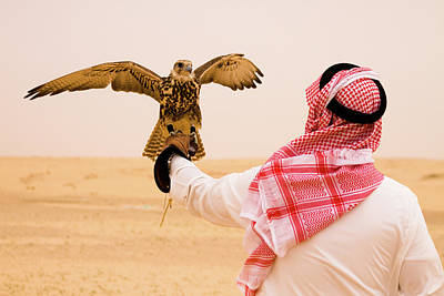 Photograph - Falcon Hunting by Universal Stopping Point Photography