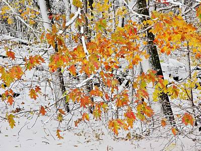 Photograph - Fall And Snow by Jeffrey PERKINS