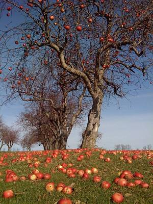 Photograph - Fall Apples by Jeffrey PERKINS
