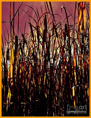 Photograph - Fall Cattails by Jennifer Lake