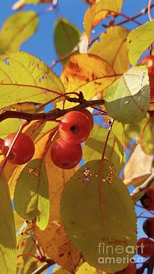 Photograph - Fall Cherries by TJ Fox