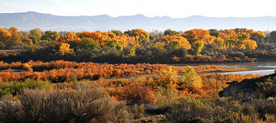 Photograph - Fall Color Along Colorado River Near Fruita by Ray Mathis