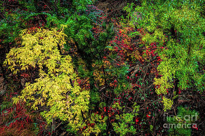 Photograph - Fall Color Along The Big Tom by Jon Burch Photography