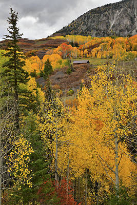 Photograph - Fall Color Aspens Near Telluride Co by Ray Mathis