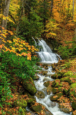Gaugin - Fall Color Back Fork Waterfall by Thomas R Fletcher