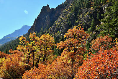 Photograph - Fall Color Oaks Along Avalanche Creek Road by Ray Mathis