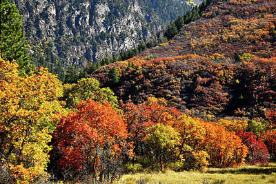 Photograph - Fall Colored Oaks In Avalanche Creek Canyon by Ray Mathis