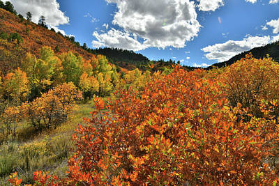 Photograph - Fall Colors Along County Road 5 Near Ridgway Colorado by Ray Mathis
