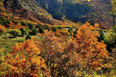 Photograph - Fall Colors Along Highway 133 In Co by Ray Mathis