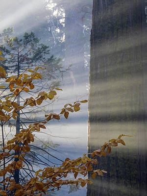 Photograph - Fall Colors And Sunrays by Martin Gollery