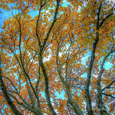 Photograph - Fall Colors  by D Davila