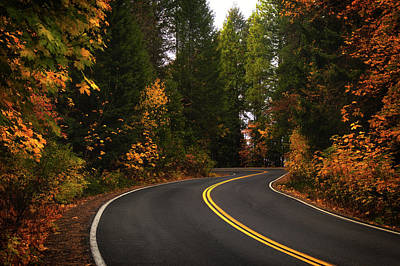 Photograph - Fall Colors Drive  by Marnie Patchett