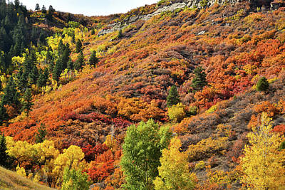 Photograph - Fall Colors Erupt Along Highway 133 South Of Mcclure Pass by Ray Mathis