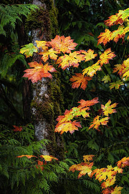 Photograph - Fall Colors In Washington State by Michael Ash