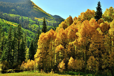 Photograph - Fall Colors Near Lizard Head Pass by Ray Mathis