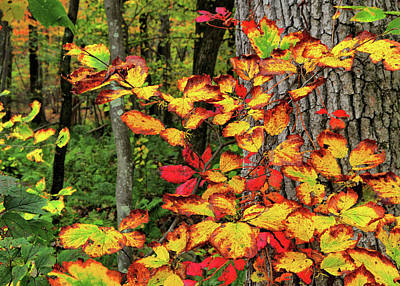 Photograph - Fall Decorating by JAMART Photography