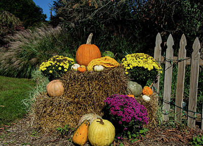 Photograph - Fall Display by Jennifer Wick