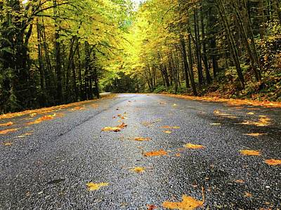 Photograph - Fall Drive by Brian Eberly