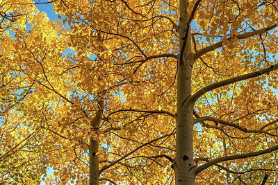 Photograph - Fall Foliage In Bright Yellow by Tony Hake