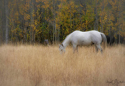 Photograph - Fall Grazing by Steph Gabler