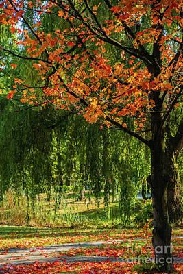 Photograph - Fall In A  Botanical Garden by Marina Usmanskaya