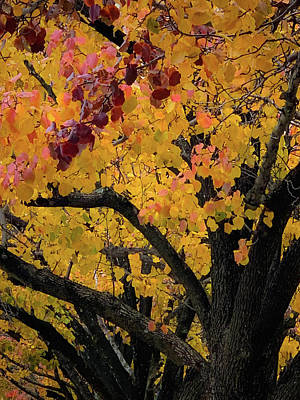 Photograph - Fall In Carlyle by Lora J Wilson