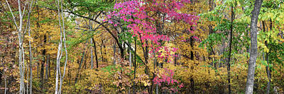 Photograph - Fall In The Ozark Mountains - Northwest Arkansas Panoramic Landscape by Gregory Ballos