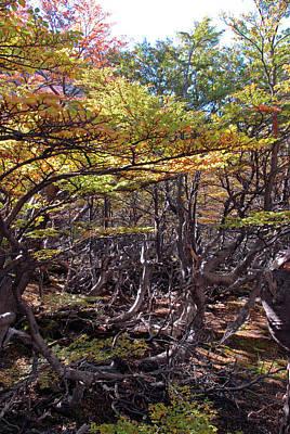 Photograph - Fall In Tierra Del Fuego by Mark Duehmig