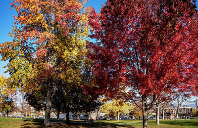 Photograph - Fall In Wenatchee by Mae Wertz