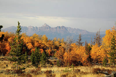Photograph - Fall in Wyoming by Shawna Fife