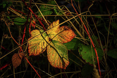 Photograph - Fall Leaves Art by Bill Posner