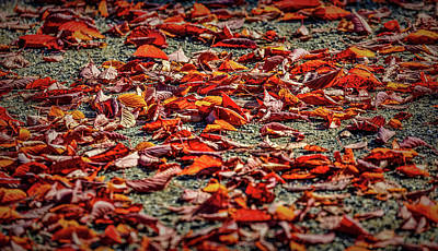 Photograph - Fall Leaves #i0 by Leif Sohlman