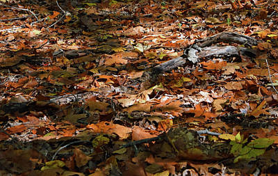 Photograph - Fall Leaves by Karen Harrison