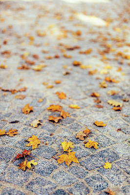 Photograph - Fall Leaves Laying On Stone Pavement. by Michal Bednarek