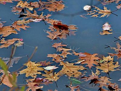 Wall Art - Photograph - Fall Leaves by Lyuba Filatova