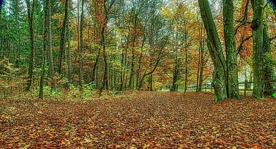 Queen Rights Managed Images - Fall light #j2 Royalty-Free Image by Leif Sohlman