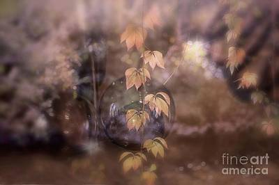 Photograph - Fall Magic by Mary Lou Chmura