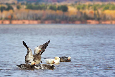 Photograph - Fall Migration At Whittlesey Creek by Susan Rissi Tregoning
