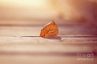 Photograph - Fall On The Boardwalk by Sheila Skogen