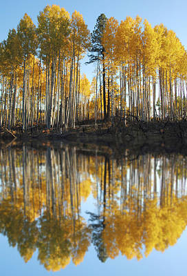 Photograph - Fall Reflected by Jeff Brunton