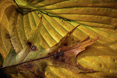 Photograph - Fall Still Life by Glenn DiPaola