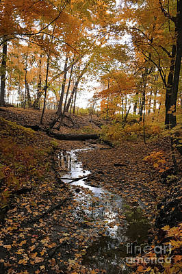 Photograph - Fall Stream by Sheila Skogen