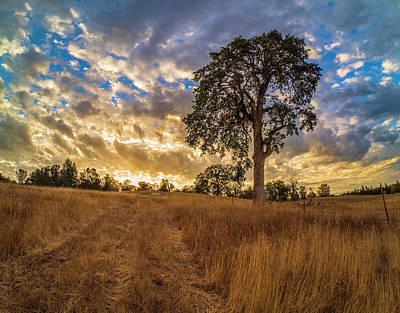 Garden Fruits - Fall Sunrise by Jonathan Hansen
