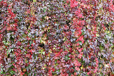 Photograph - Fall Wall  by Carol Groenen